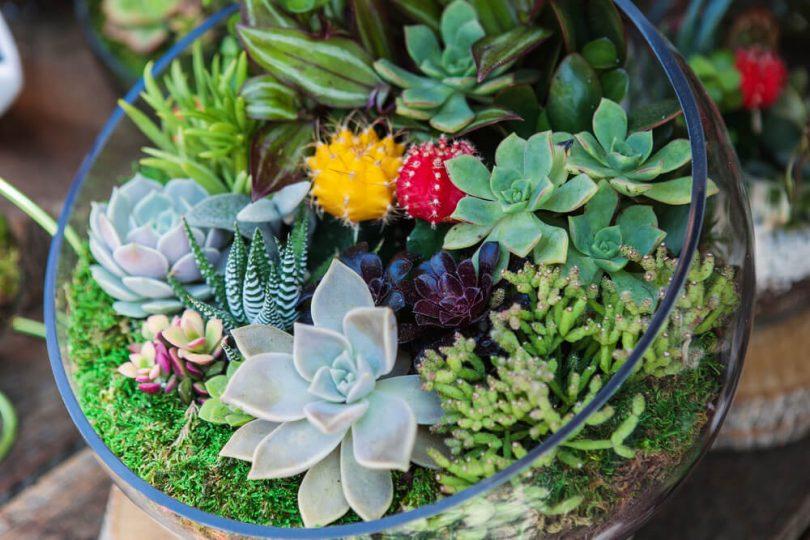 Terrário para plantas